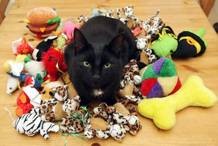 Things your cats might love playing with.