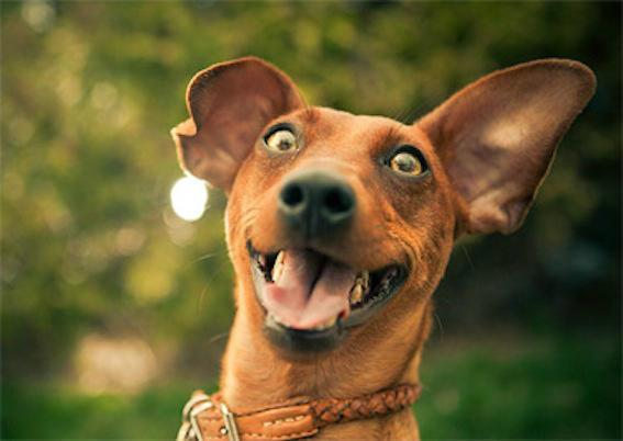 100 Reasons Why Dogs Are Better Than Humans