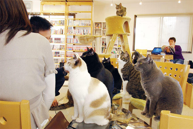 5 Cafes In Japan For Animal Lovers