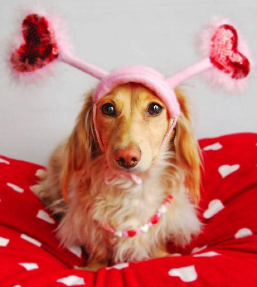 8 Dogs Who Want To Be Your Valentine