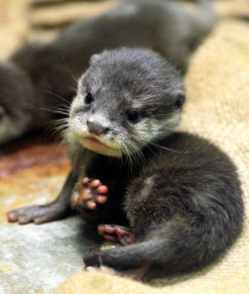 Here Are 15 Adorable Animals To Help You Get Through Your Week
