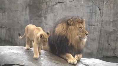 Here's to Dad: Top 10 Best Fathers in the Animal Kingdom