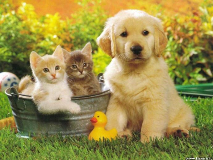 Why Cats and Dogs Rule the World