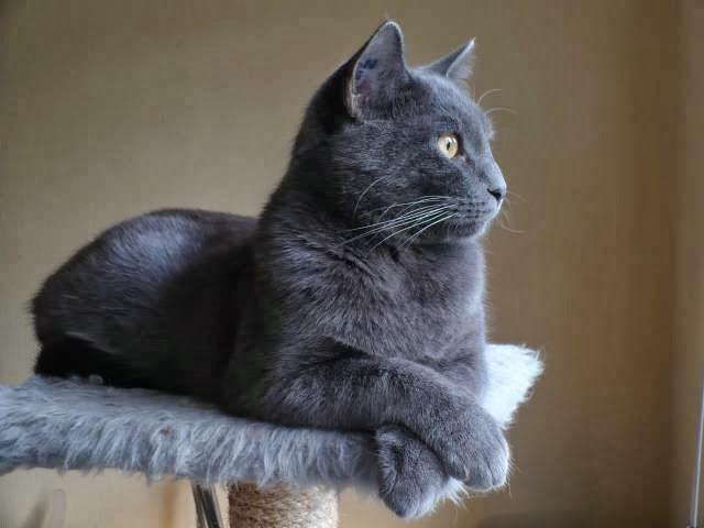 20 Rare Cat Breeds From Around the World 🌎🐱