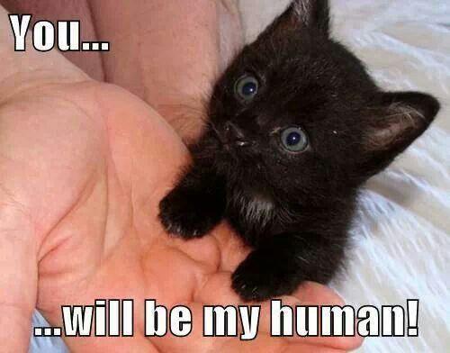 Cute Black Kitten Memes