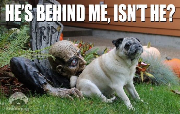Goodbye Halloween
