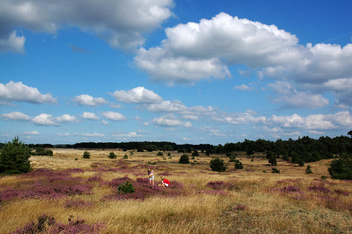 The most beautifull nature in the Netherlands.