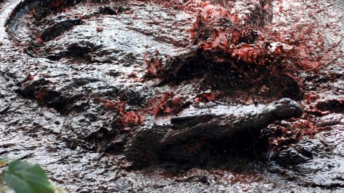Ww2 Japanese Soldiers Eaten By Crocodiles
