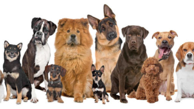 Buying a Dog: Common Errors
