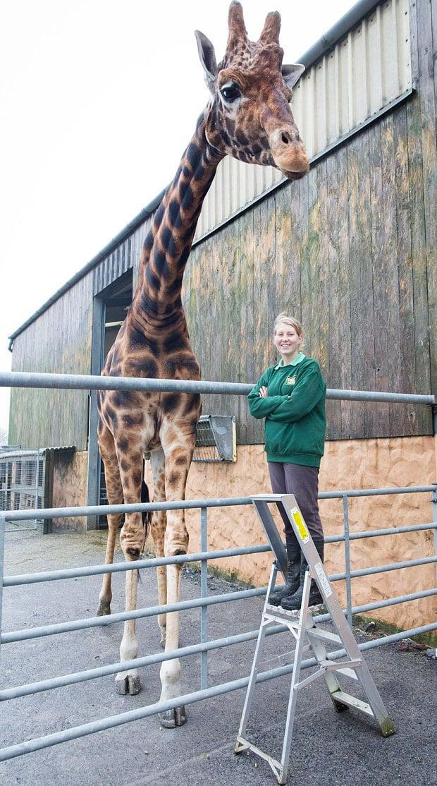 World's Tallest...