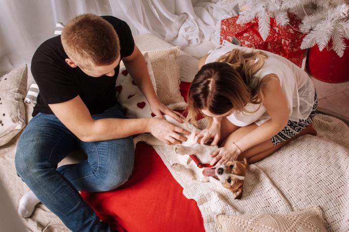 How To Handle Pet Custody After Breakups