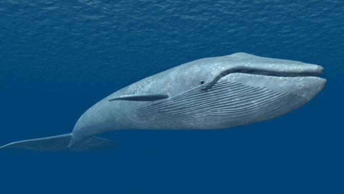 Blue Whale Challenge: Not a Game but a Death Trap!