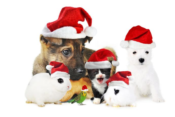 Give Gifts, Not Pets