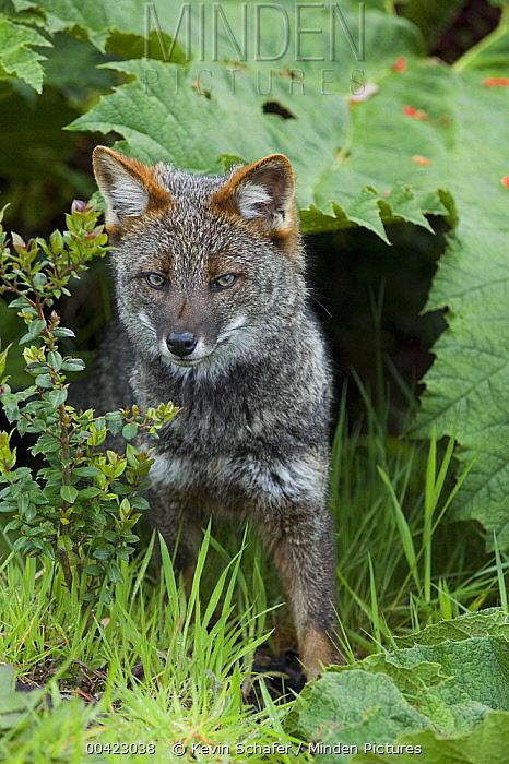My favorite Wild Dog Species (Part 2)
