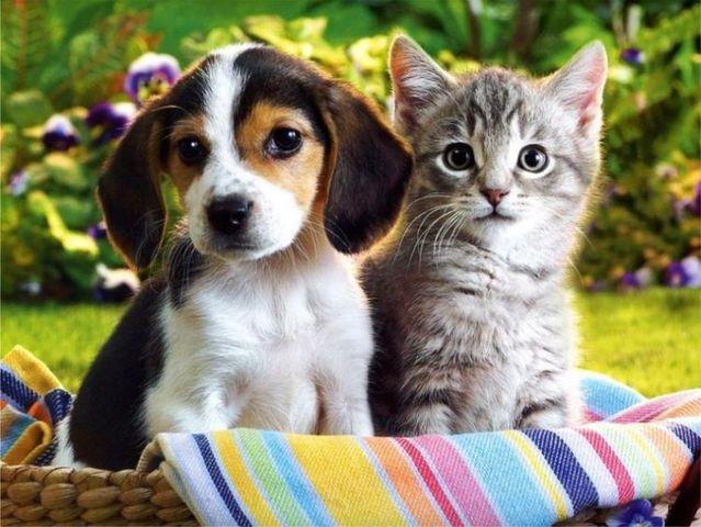 You Don't Have to Either Like a Cat or a Dog, You Can Like Both!