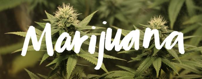 San Francisco Dropping Marijuana Convictions