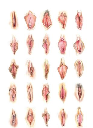 Terminology Explained: I Think You Might Mean Vulva When You're Saying Vagina.