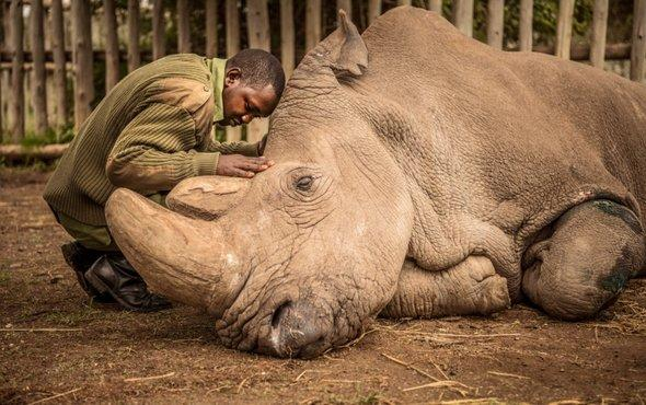 Rest in Peace, Northern White Rhino