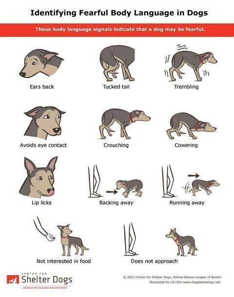 Tips to Improve Your Relationship With Your Pet!