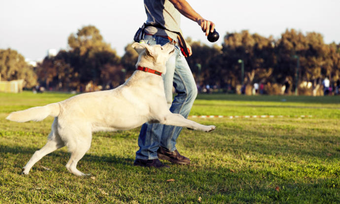 13 Reason Why Dogs Are Better Than Cats!