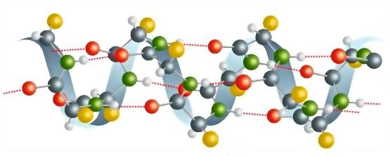 Model of a typical protein: the amino acids are the yellow molecules.