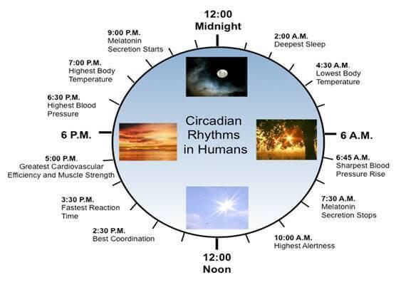 Chart showing normal daily Circadian Rhythm.