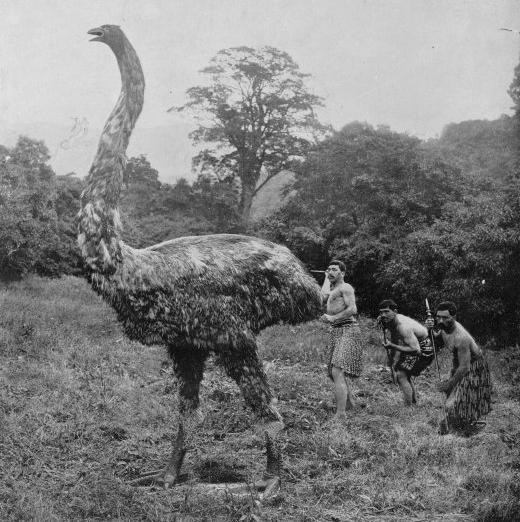 8 Fascinating Animals That Are Now Extinct