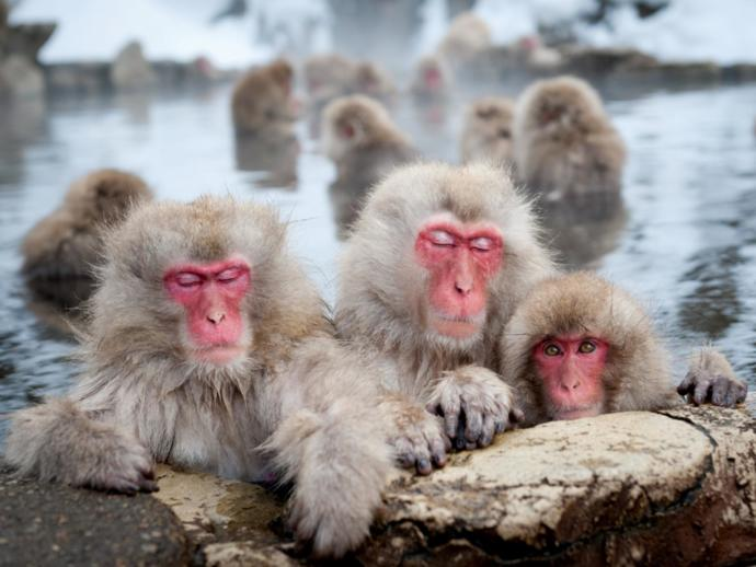 5 Animals Native To Asia