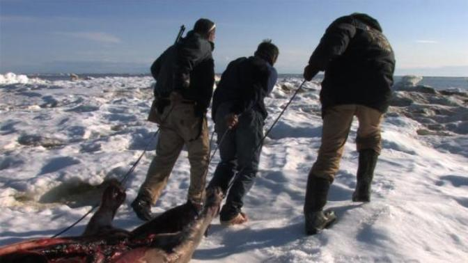 People who want the Seal Hunt in Northern Canada and Alaska to stop are saying they want the native population to starve and freeze to death.