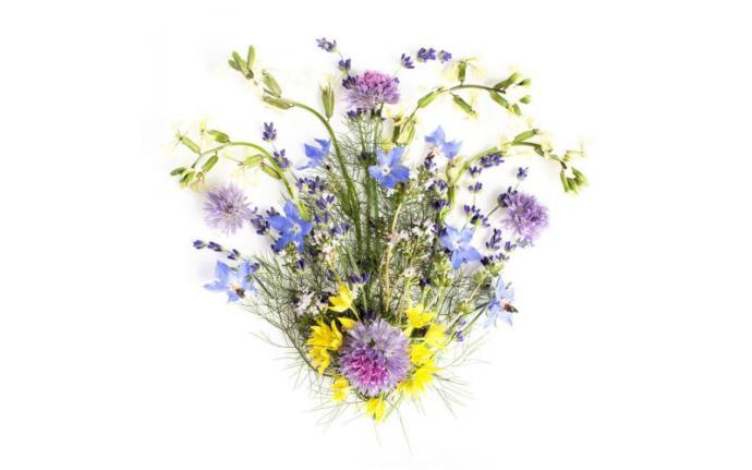 Captivate your senses with flower tea