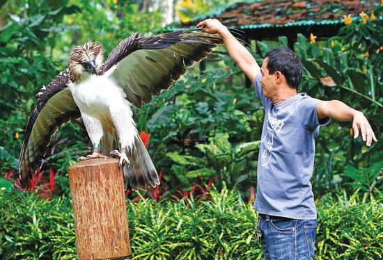 The Philippine Eagle in Davao