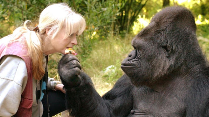 Delineating Humans And Apes