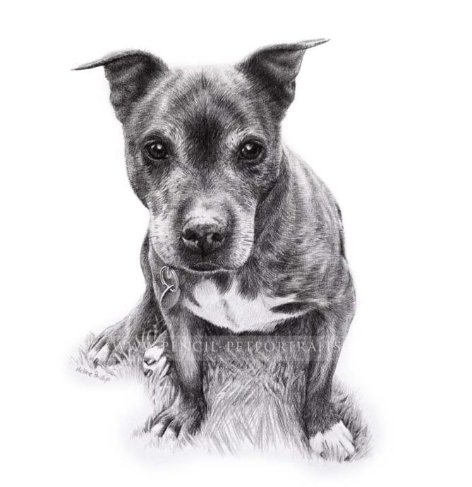 Hand Drawn Pencil Sketch of His Dog gift