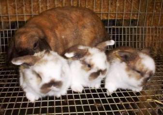 Breeding Rabbits for Meat and Manure Part2
