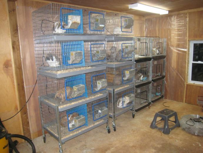Keeping Rabbits for Meat and Manure #3 - how to look after Your Stock