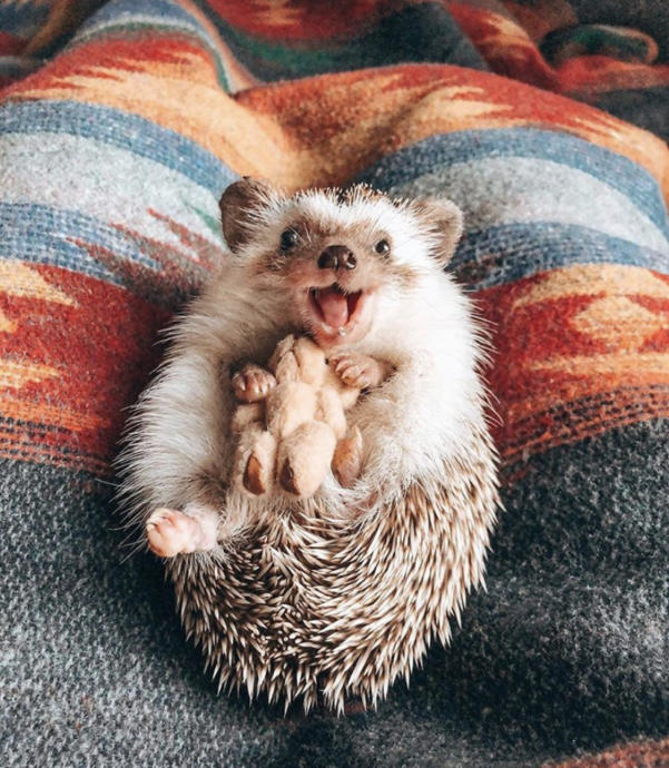 Cute pictures of animals to make your day :)