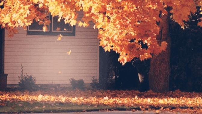 Embracing Autumn