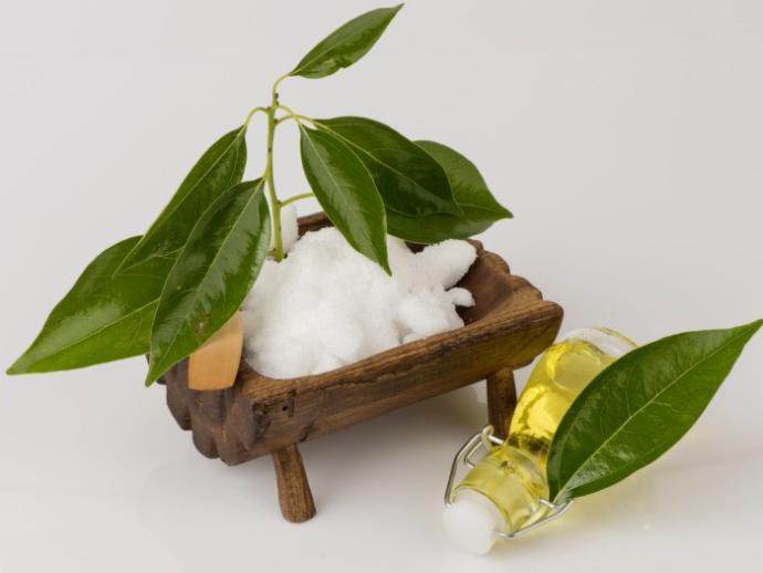 Leaves, refined lumps and oil of the camphor tree.