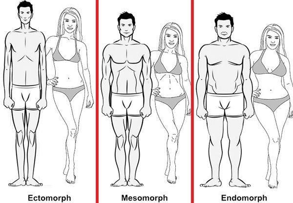 Three basic body types