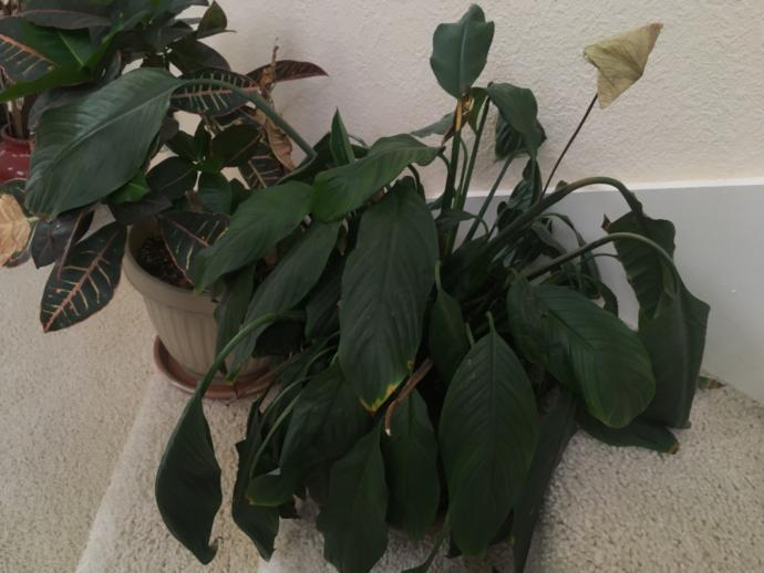 If you cant keep houseplants alive, you might be neglectful.