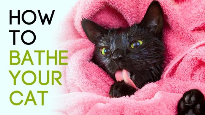 How To Properly Bath Your Cat - The facts you never knew
