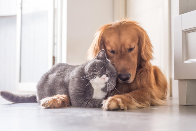 Three Reasons why Dogs are Better than Cats