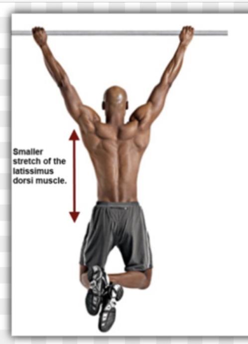 Female Aesthetics, Ribs and Shoulders (fix)