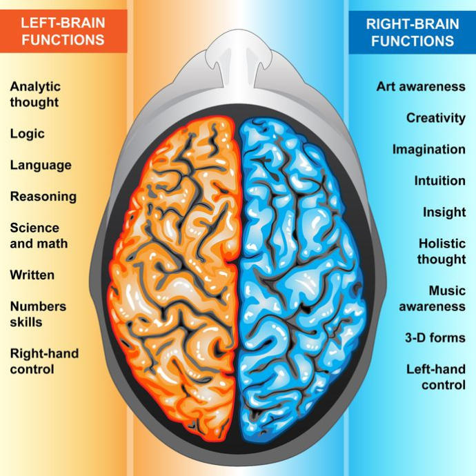 The brain structure for beginners