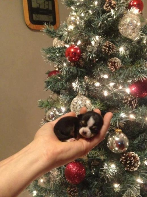 We Heart it : Christmas Edition