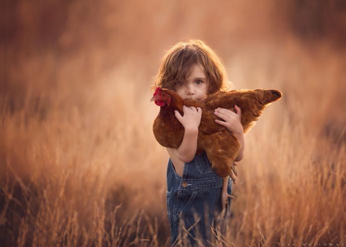 Photo: Lisa Holloway, Chicken Peek-a-Boo