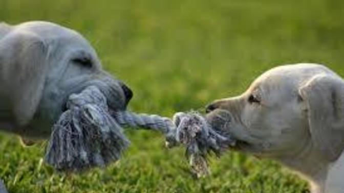 """One way to resolve an """"unresolvable"""" argument"""