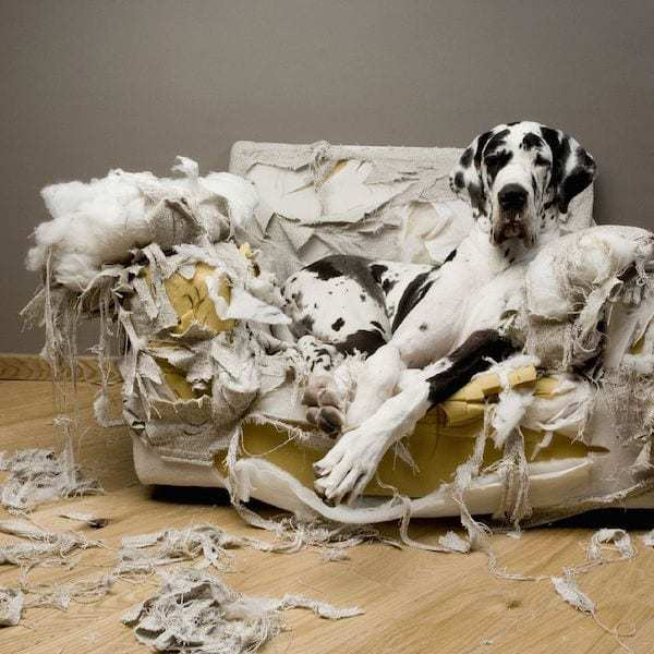 Dogs are overrated in most cases : Waste of time and money!