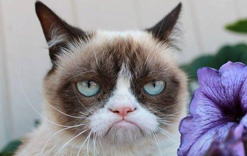 5 Cats Who Are Grumpier Than Grumpy Cat