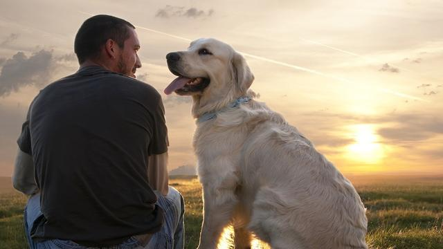10 Reasons Dogs Are Better Than People